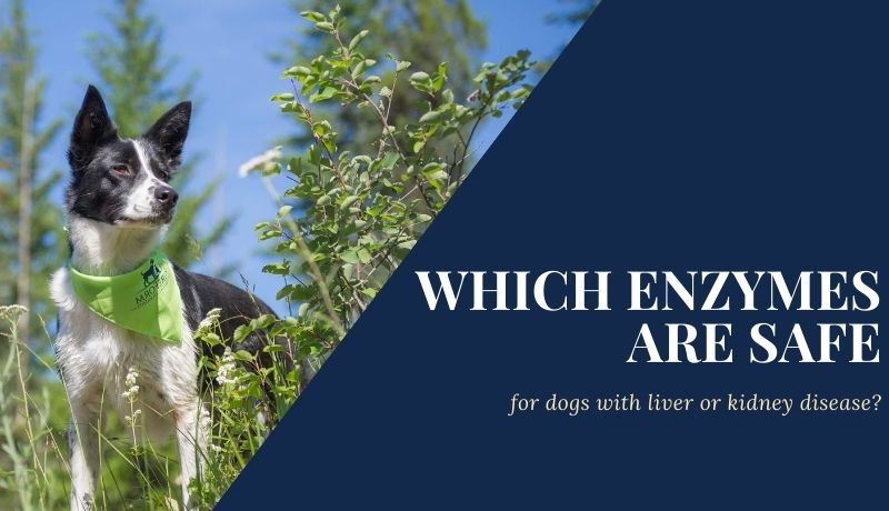 Blog post: which enzymes are safe for dogs with liver or kidney disease?