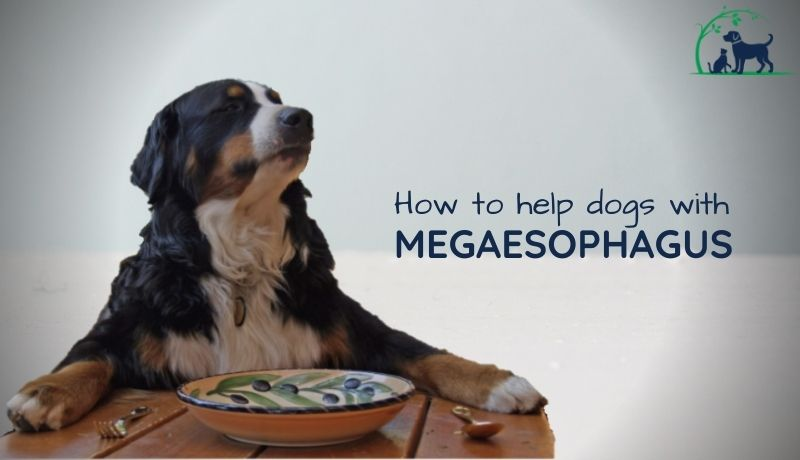 megaesophagus in dogs and cats