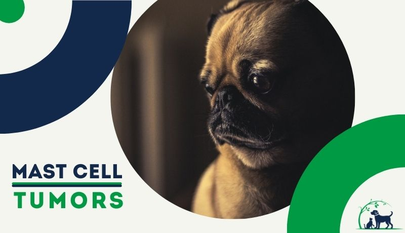 Mast Cell Tumors in dogs & cats