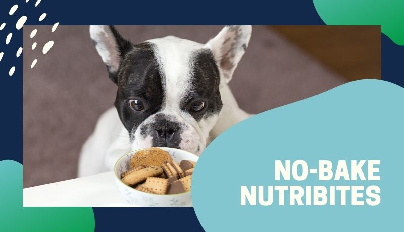 black and white dogs stares at no-bake nutribites