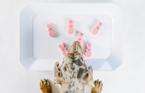 Peeps for pups
