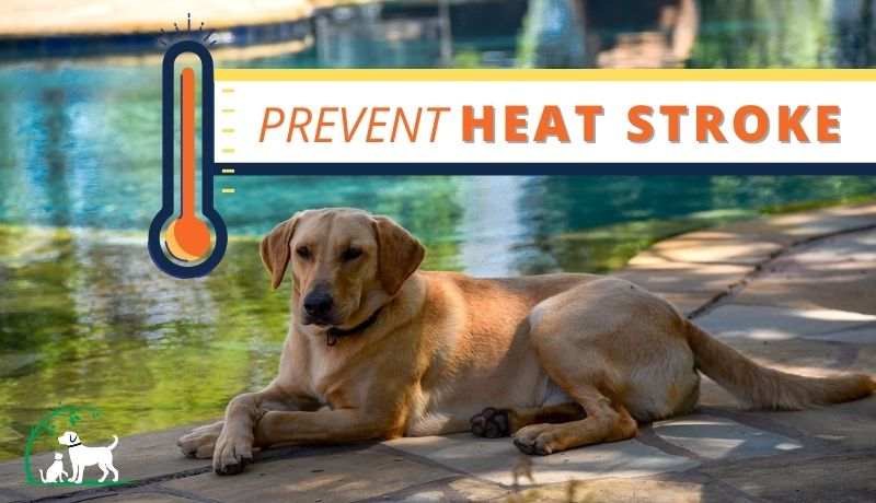 Preventing Heat Stroke: How to keep your pets cool this summer