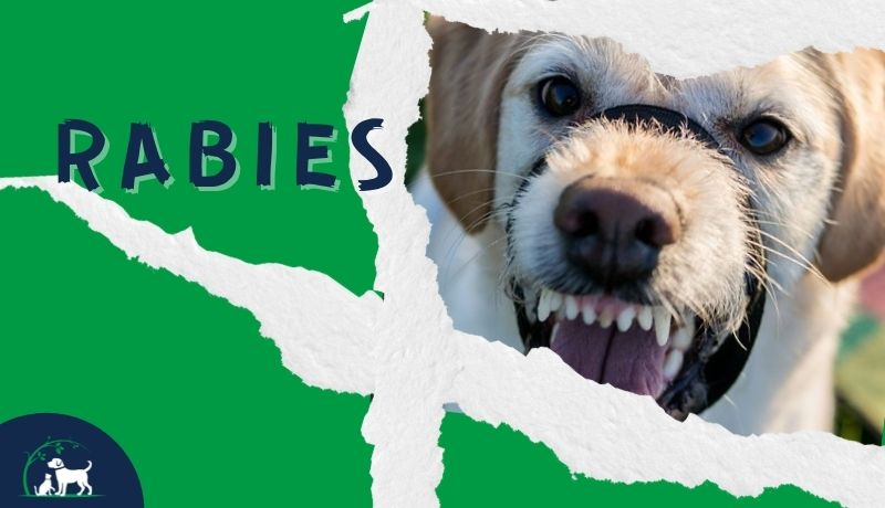 Rabies in Dogs