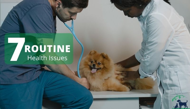 7 Routine Pet Health Issues & How to Deal With Them