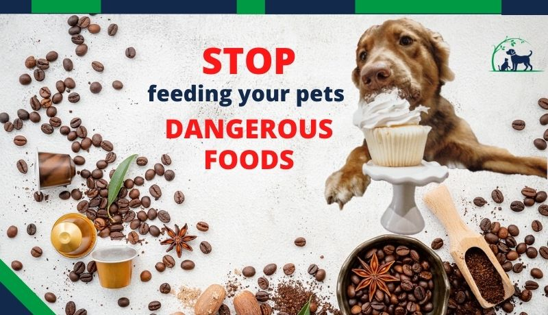 STOP feeding your pets these dangerous foods