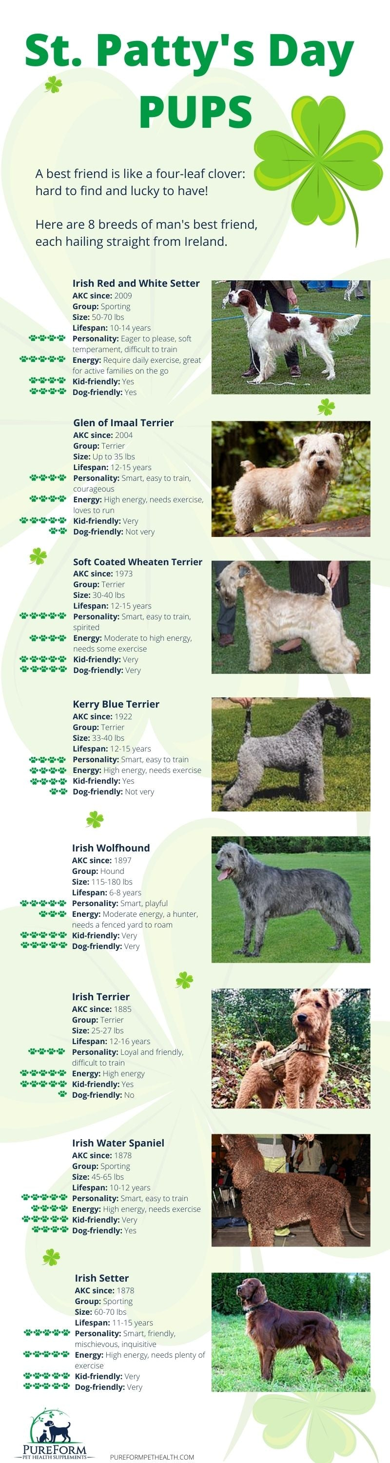 Irish Dog Breeds for St. Patrick's Day 2021 (Infographic)