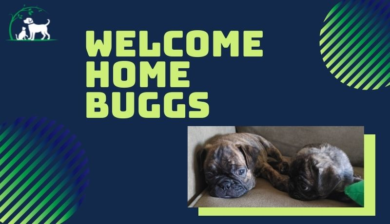 welcome home, buggs