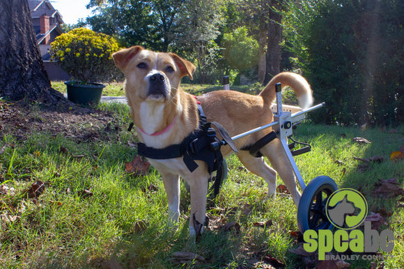 Dog Wheelchair By Best Friend Mobility - [pups_path]
