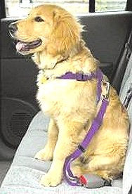 Doggy Seat Belt - [pups_path]
