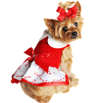 Dog in Candy Cane Dress