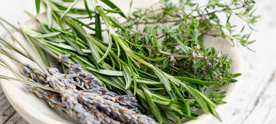 Rosemary Oil in Personal and Skin Care