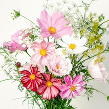Laden Sie das Bild in den Galerie-Viewer, Jora Dahl - Wild Bouquets Cosmos Collection