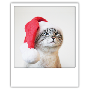 Retropostkarte Pickmotion christmas cat