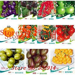 100 Mini Sweet Melon Seeds Melon Tree Non GMO-Organic Fruit and Vegetable Seeds
