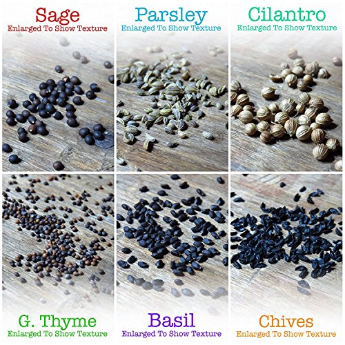Non-GMO Culinary Herb Seed Collection, 12 Individual Seed Packets Incl. 4, 000+ Seeds Collectively (Sage, Basil, Chives, Cilantro, Rosemary, Dill, Marjoram, Oregano & More!)