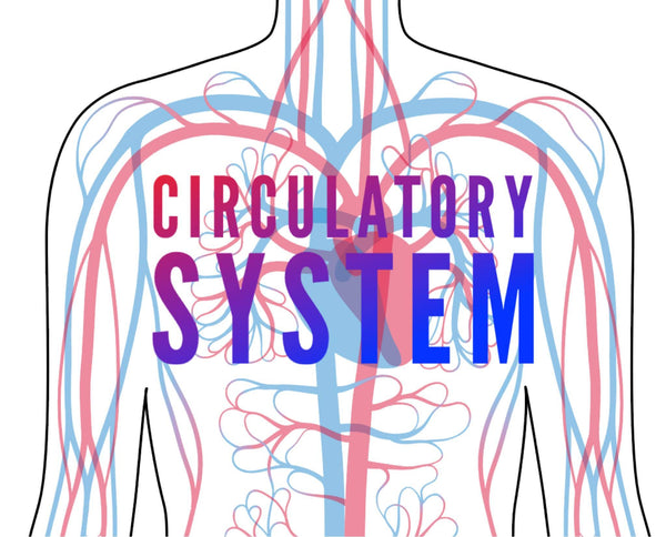 Circulatory System Eyeshadow Palette - The-Lab-Cosmetics