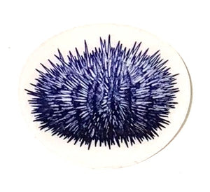 blue urchin decal