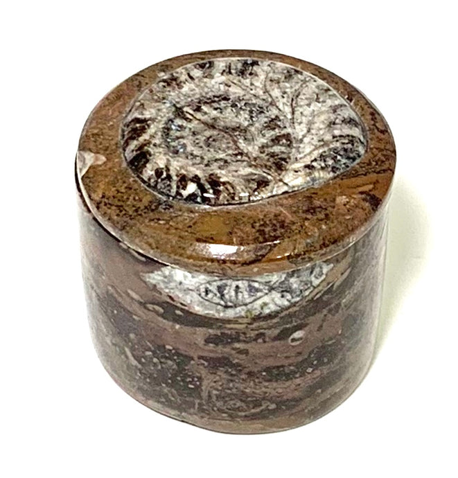 ammonite fossil circular box
