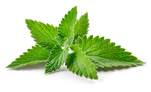 Beauty Facts About Spearmint