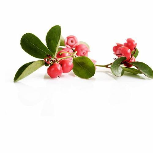 Beauty Facts About Wintergreen