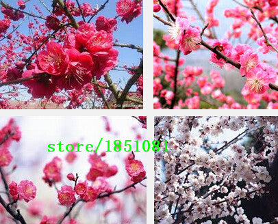 100 Mural Plum Blossom Prunus Mume Flowers Chinese Painting picture Removable Wall Art Decals Stickers Home Decoration