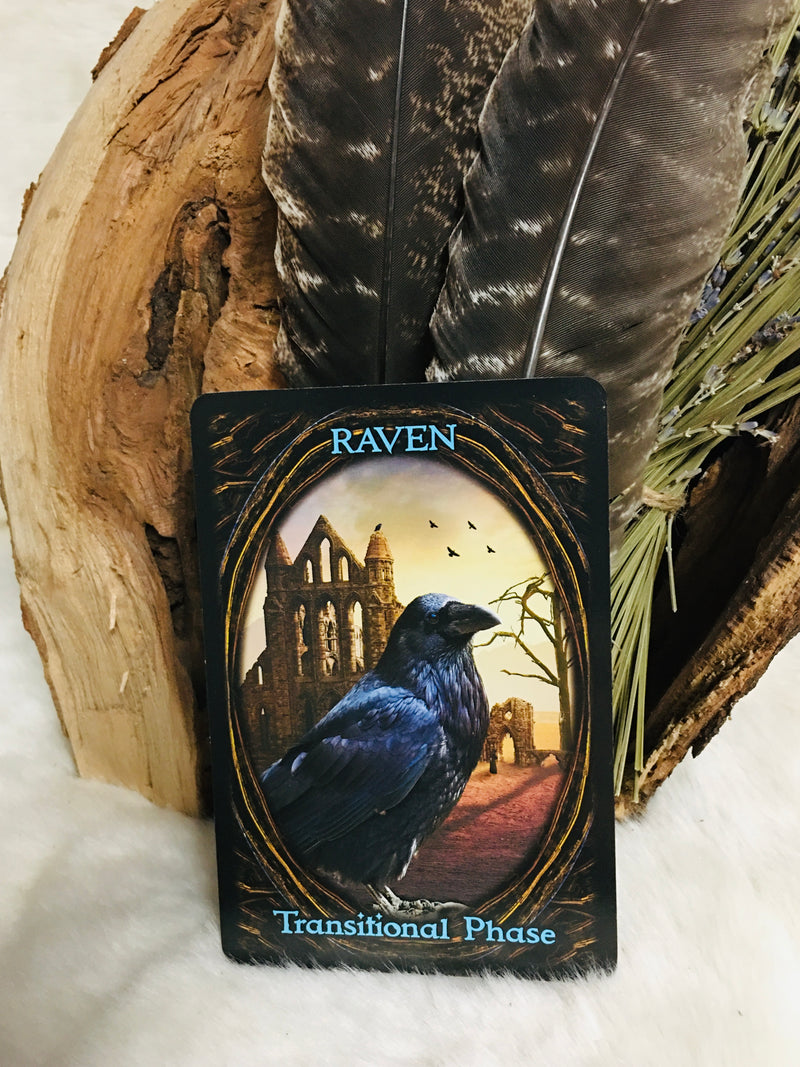 oracle, kali, oracle cards, kali ma, divination, adrian michigan, michigan, ann arbor, ypsilanti, toledo, oracle cards, mystic wanderers, witchcraft, divination, tarot, metaphysical, spiritual, store,