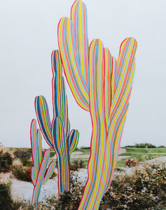 Cacti in Color - Christine Mueller Photography
