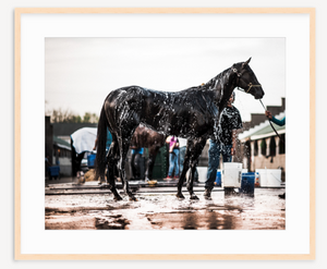 Thoroughbred - Christine Mueller Photography