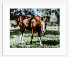 Load image into Gallery viewer, Horsing Around - Christine Mueller Photography