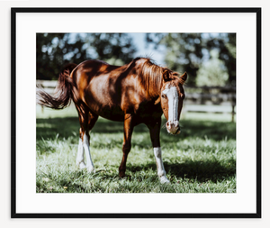 Horsing Around - Christine Mueller Photography