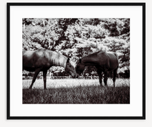 Load image into Gallery viewer, Brotherly Love - Christine Mueller Photography