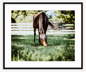 Greener Pastures - Christine Mueller Photography