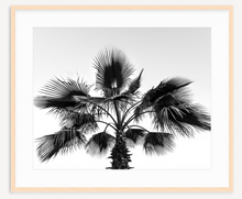 Load image into Gallery viewer, Simplicity - Christine Mueller Photography