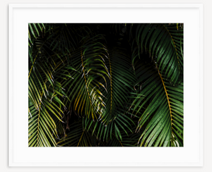 Moody Palms - Christine Mueller Photography