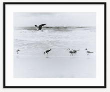 Load image into Gallery viewer, Sea Gull in flight - Christine Mueller Photography