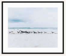 Load image into Gallery viewer, Sea Gull Point - Christine Mueller Photography