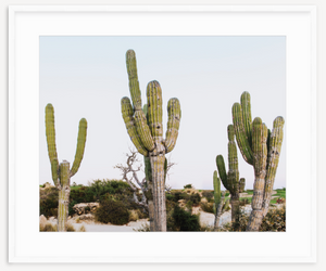 Cacti Love - Christine Mueller Photography