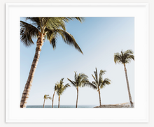 Load image into Gallery viewer, Palm Daze - Christine Mueller Photography
