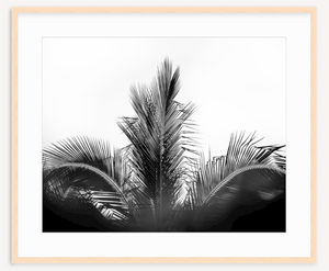 Majestic Palm - Christine Mueller Photography