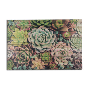 """Succulent Garden"" Print on Planked Wood Wall Art"