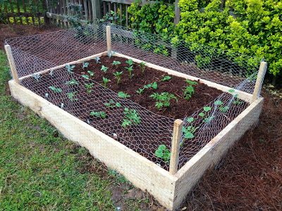 raised garden bed with chicken wire fence cover
