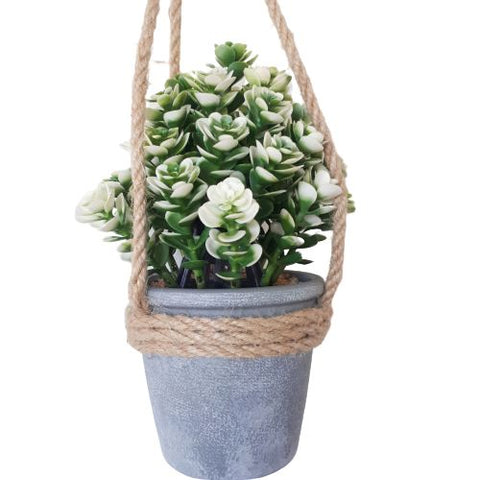 hanging succulent bush