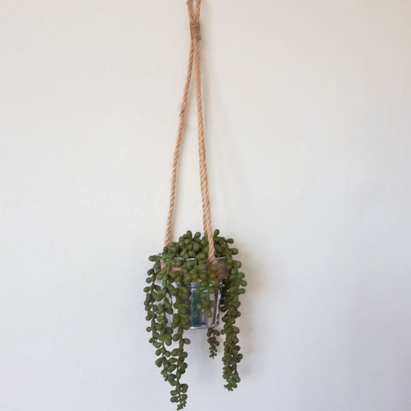 hanging succulent string of pearls