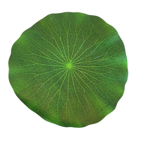 leaf place mat - water lily