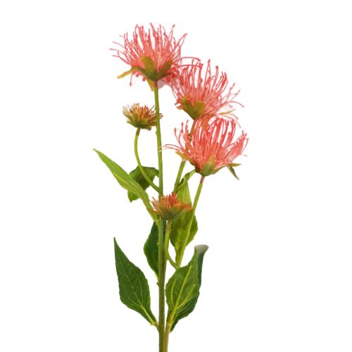 pink pincushion flowers