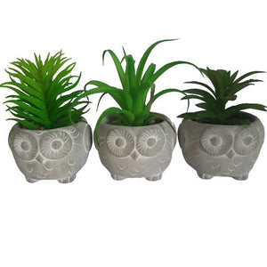 succulent set - owls