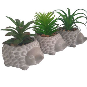 succulent set - hedgehogs