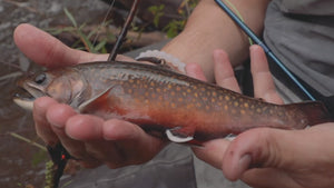 Fly Fishing For North Shore Small-Stream Brookies | THE DRIP [Ep. 5]