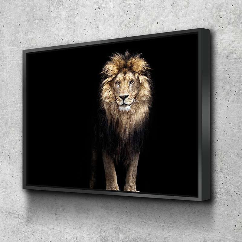 majecstic lion looking up into the sunset canvas picture print