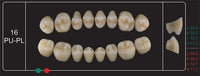 Creation Creopal Full Teeth Mould PU16, 8er